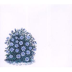 ・Marihiko Hara「Ocean」(from「Flora」Album)